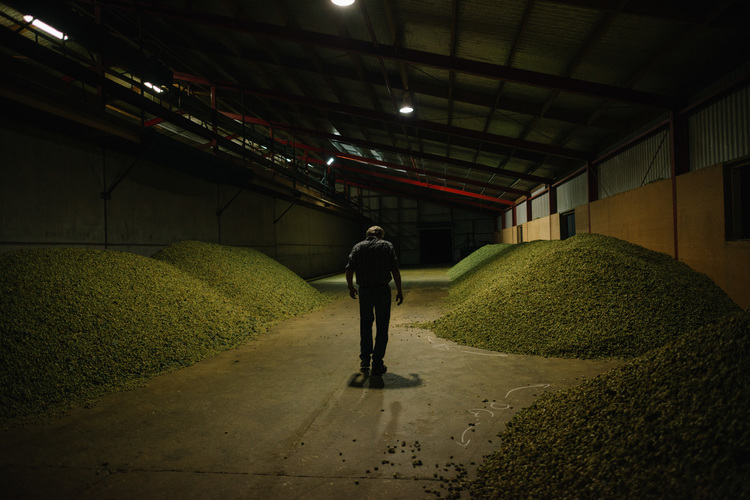 New Trial Hops = Exciting New Beers…………
